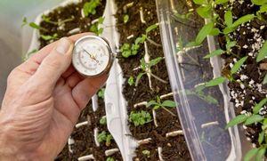 6 Основных ошибок при выращивании рассады перца.