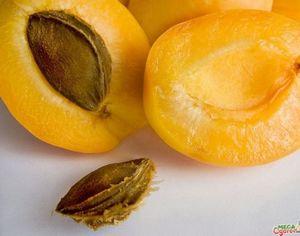 Абрикос ананасный: история происхождения, описание и полезные свойства