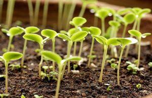 Аммофоска - минеральное удобрение для большого урожая
