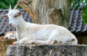 Азы фермерского бизнеса: выгодно ли разводить коров, свиней, овец и коз?