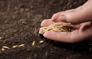 Базовые закономерности посева, которые должен знать каждый дачник