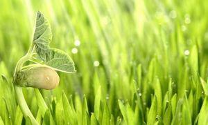 Биостимуляторы роста растений