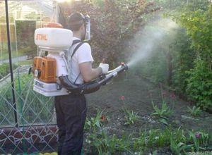 Боемся с вредителями сада. правила опрыскивания деревьев