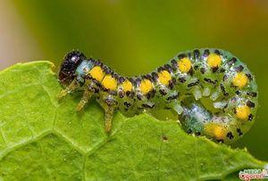 Борьба с гусеницами: самые эффективные методы и рекомендации