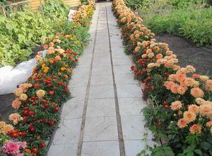 Бордюры для дачи и сада