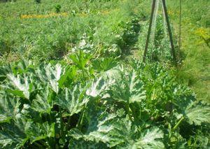Боремся с сорняками в огороде
