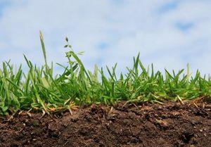 Черви в огороде - источник плодородия почвы.