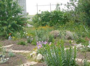 Что делать в саду в апреле месяце?