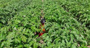 Что растения получают из почвы: корневое питание и дополнительная подкормка