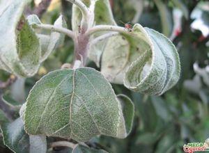 Cоветы садоводам: как правильно посадить яблоню в саду