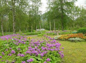 Цветник в саду для занятых. сажаем лаватеру.