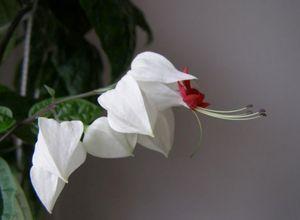 Цветочный кроссворд мои любимые цветы.