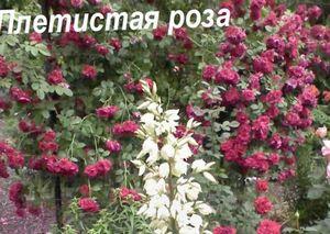 Цветы для тени в саду