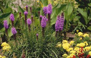 Декоративные и цветущие растения...