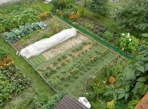 Для чего нужно мульчирование почвы в саду