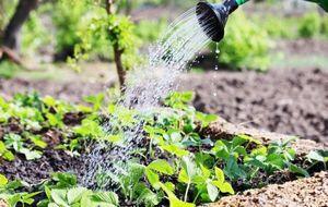 Дозы и нормы внесения удобрений под садовые и огородные культуры