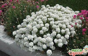 Фитосвет д - самая удобная фитолампа для выращивания растений