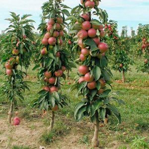 Формирование кроны яблони: способы и сезонные особенности