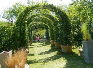 Формировочная обрезка живой изгороди в саду