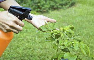 Фунгицид топаз - эффективная борьба с заболеваниями растений