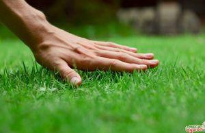 Газон для ленивых – чудо лужайка на вашем участке