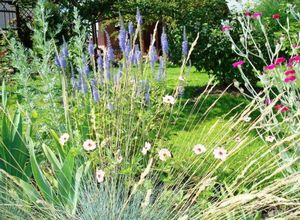 Голубоглазая вероника: популярные виды для выращивания в саду