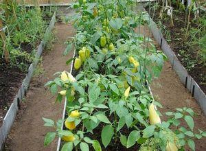 Грядки на даче. как вырастить урожай