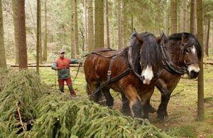 Характер лошади-порочные привычки, и какую лошадь купить?