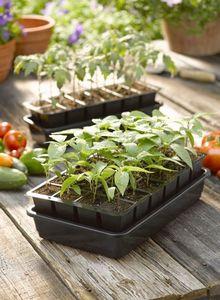Характеристики рассады основных овощных культур