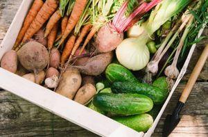 Хранение урожая: вода для помидор, вентиляция для картофеля и другие секреты
