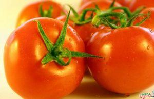 Индетерминантные сорта томатов для теплиц: особенности и описание сортов