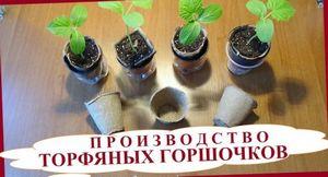 Использование торфяных горшочков для рассады