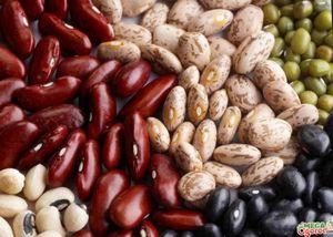 Как быстро прорастить фасоль: подготовка семян и способы проращивания