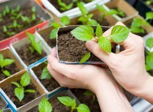 Как использовать кофейную гущу в качестве удобрения для комнатных растений и рассады?