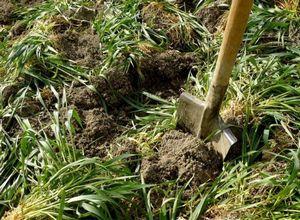 Как использовать сидераты, растения-удобрения на участке