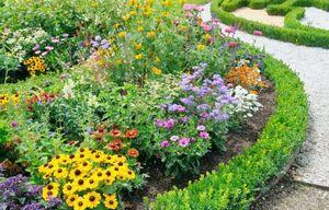 Как красиво посадить цветы на даче - правила сочетания и оформления клумб