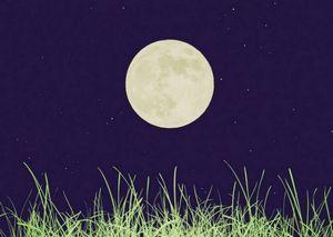 Как луна влияет на растения или зачем нам календарь садовода