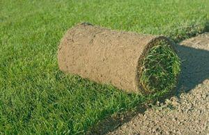 Как оборудовать газон?