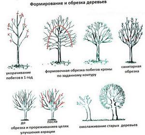 Как обрезать деревья?