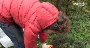 Как подготовить и укрыть розы на зиму - способы утепления + видео
