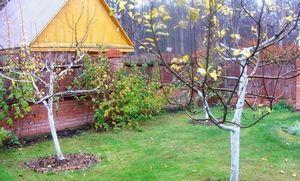 Как подготовить сад, огород цветник, сад после зимы