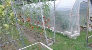 Как повысить плодородие почвы?
