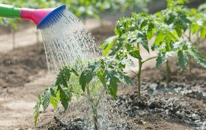 Как правильно поливать в жару грядки на дачном участке