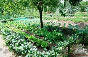 Как правильно разместить овощные растения на участке?