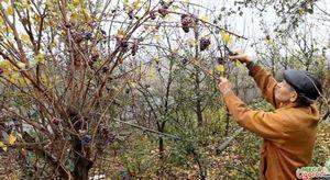 Как правильно ухаживать за виноградом на протяжении года