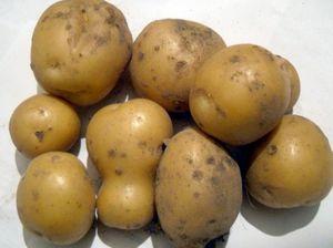 Как правильно выбрать сорт картофеля на свой участок