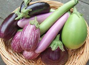 Как правильно выращивать баклажаны