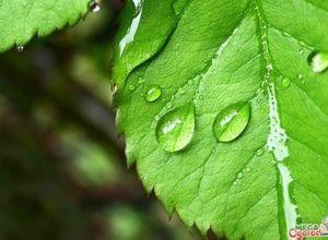 Как происходит водный обмен у растений: процессы и движение воды по растениях