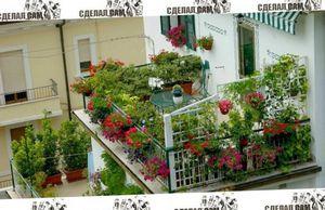 Как провести озеленение балкона и лоджии