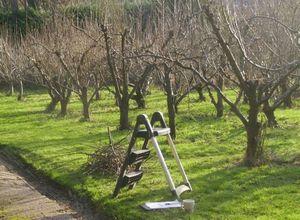 Как проводится обрезка деревьев ранней весной - яблоня
